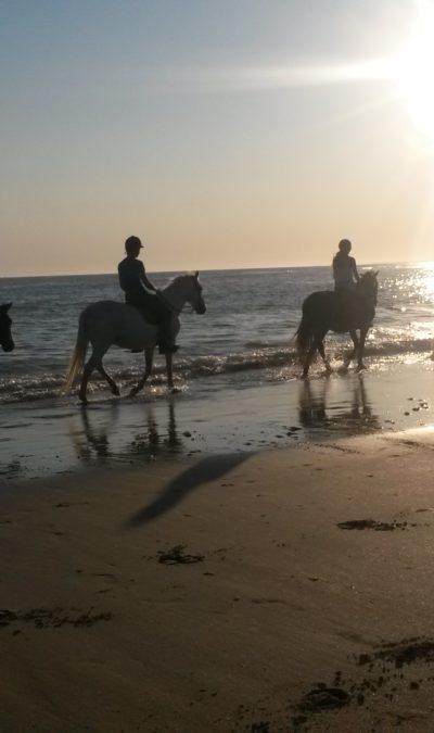 ile de re ou faire des promenades à cheval ?