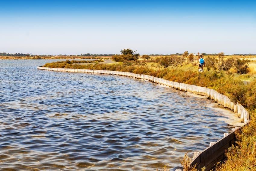 L'Ile de Ré, se montre au naturel en parlant de sa biodiversité